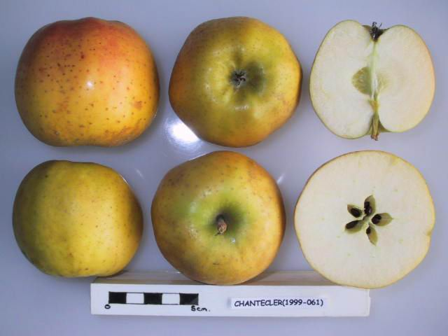 UK National Fruit Collection